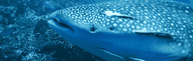 潜水在 苏梅岛