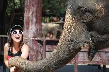 Elephantstay