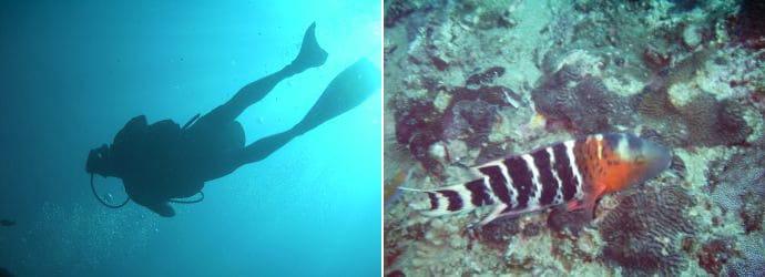 潜水在 丽贝岛