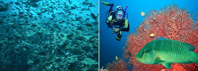 潜水在 兰达岛