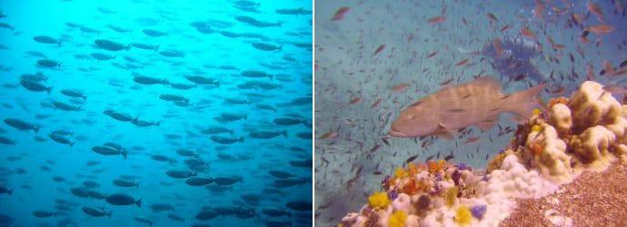 潜水在 皮皮岛